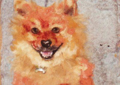 Dog Red, Pomeranian