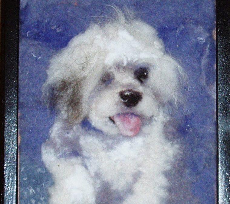 Dog white on Blue