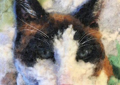 Cat Calico